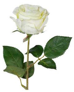 Rose 45cm - Lime